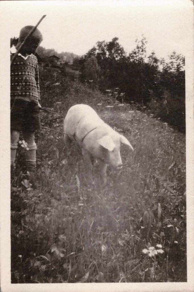 Bild: aus dem Gürtler-Ferienalbum: Knabe mit Schwein