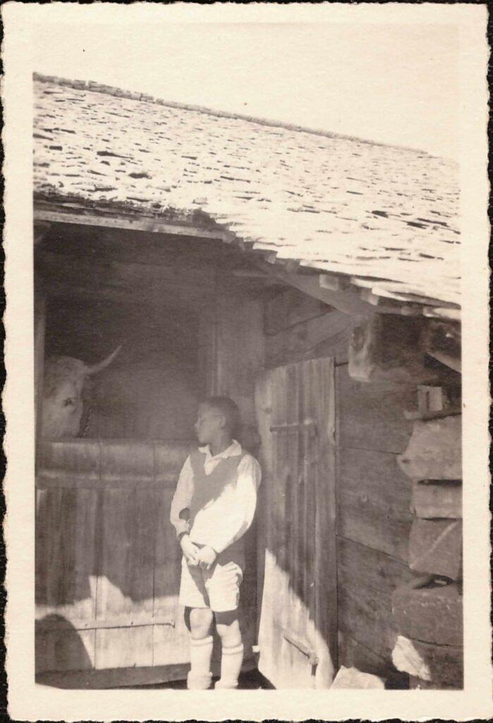 Bild: Kurt Gürtler blickt in den Kuhstall