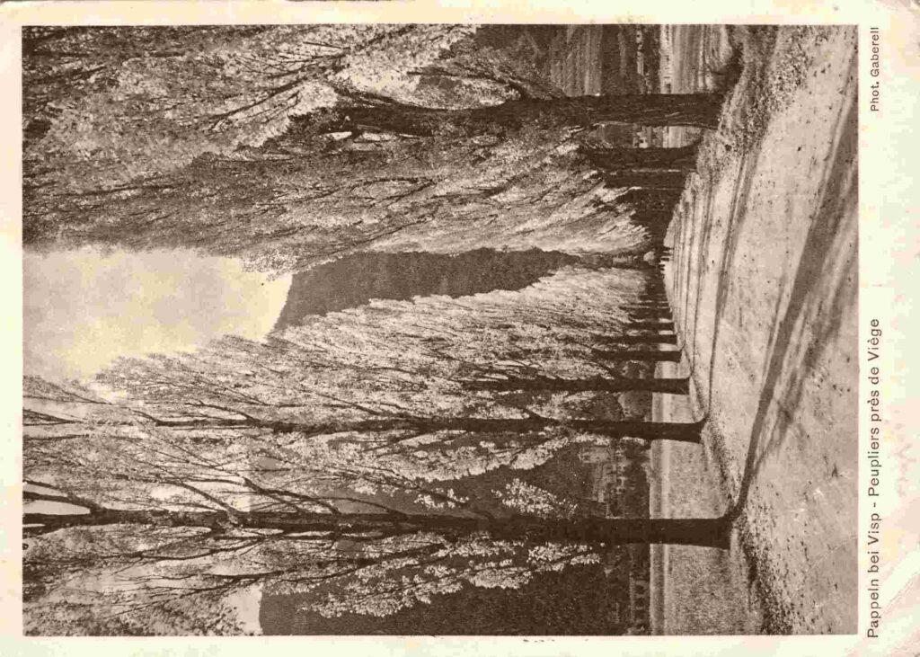 Bild: Postkarte «Pappeln bei Visp» 1932